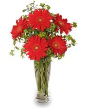 Ritzy Red Gerberas